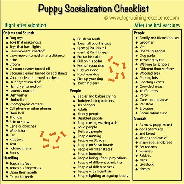 Dog Obedience Training Checklist